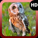 Owl Wallpaper icon