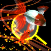 Goldfish Dream goldfish scoop & goldfish breeding
