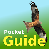 Pocket Guide UK Birds of Prey