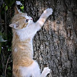 Help ! by Pieter J de Villiers - Animals - Cats Kittens