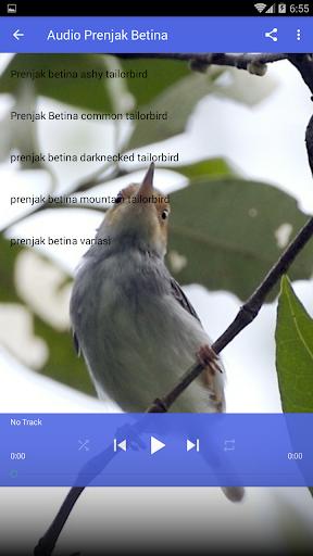 Download Suara Prenjak Betina Mp3 : download, suara, prenjak, betina, Download, Suara, Burung, Prenjak, Gacor, Android, STEPrimo.com