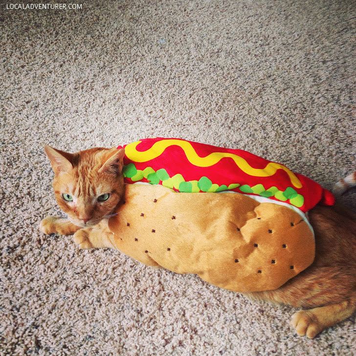 Halloween Costumes for Cats.