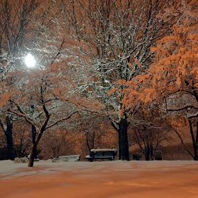 Night by Karen Carnahan - City,  Street & Park  City Parks ( park, snow, night )