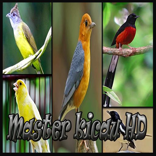 MASTER KICAU HD