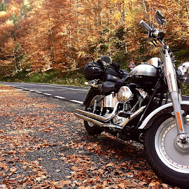 by Orlando Neagoe - Transportation Motorcycles ( motorcycle, autumn leaves, autumn, harley davidson, ride,  )