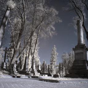 Lviv Cementry in InfraRed by Oleksii Liebiediev - City,  Street & Park  Cemeteries ( infrared, lvov, cemetery, lwiw, grave, graveyard,  )