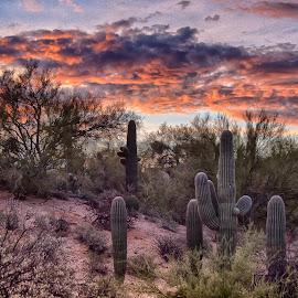 Tucson Sunset by Charlie Alolkoy - Landscapes Deserts ( desert, sunset, arizona, tucson, sunrise, saguaro, cactus )