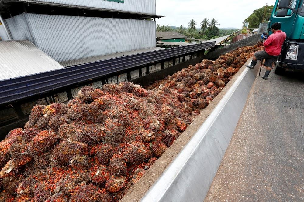 Palmoliebedryf veg terug om die lot van tabak te vermy