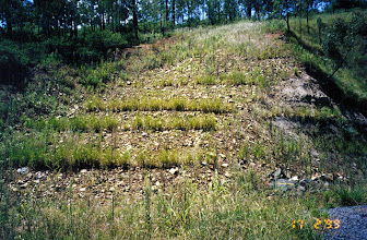 Photo: AUS-RY49 Australia - Railroads in Queensland. Newly planted Vetiver used to stabilize an embankment