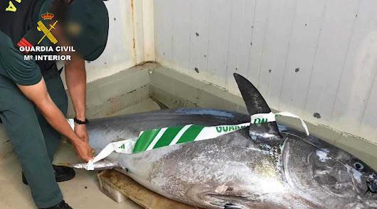 Uno de los atunes incautados.