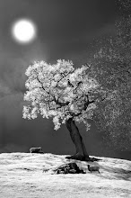 Photo: The Shimmering Tree (Clive Haynes)