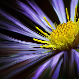 macro flower by Kevin Adams - Digital Art Things