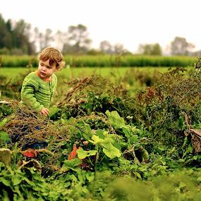 Hunting for Pumpkins by Karl Cummings - Babies & Children Children Candids ( pumpkins, halloween )