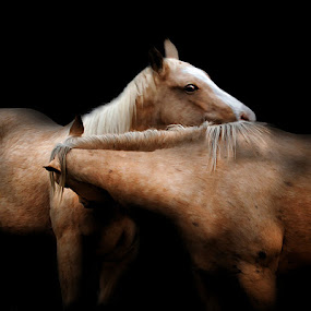 Twins by Stacey Nagy - Animals Horses ( hrses, stacey nagy photography, stacey's horses, twins, stacey nagy )