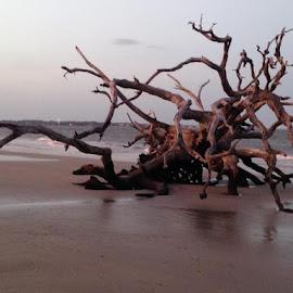 Driftwood Beach by Julie Sawicki - Nature Up Close Water ( water, sand, driftwood, wood, sunset, ocean, beach )