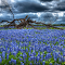 30900-Bluebonnet Tree.jpg