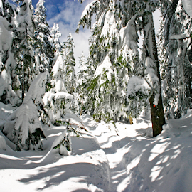 Mt Seymour, North Vancouver, Canada by Reinilda Sissons - Landscapes Forests (  )