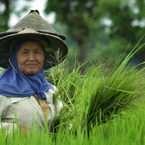 My Aunt is Farmer by Alim Sumarno - People Street & Candids ( farmer, fields )