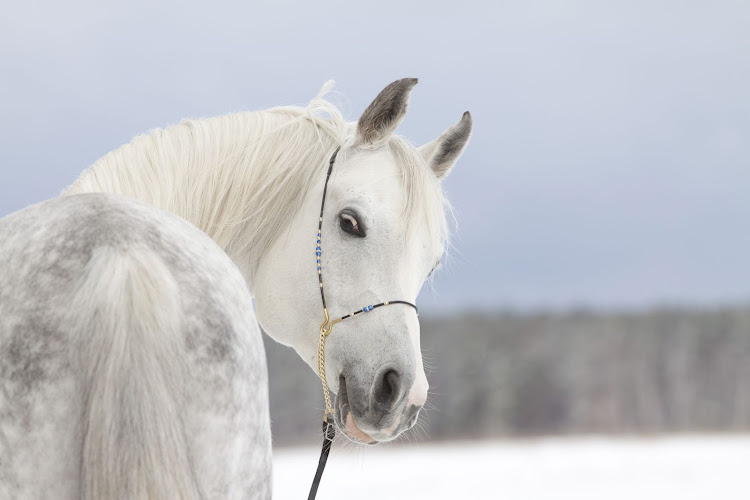 There's no prince on a white horse coming to our rescue. Picture: 123RF/MARYART1