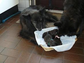 Photo: Natascha en Jasmijn met de pups van Phaedra