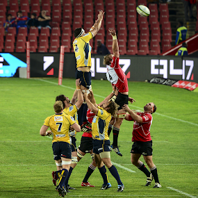 LineOut Dominance by Richard Wicht - Sports & Fitness Rugby ( ball, fitness, south africa, australia, sports, lions, game, rugby, boots )