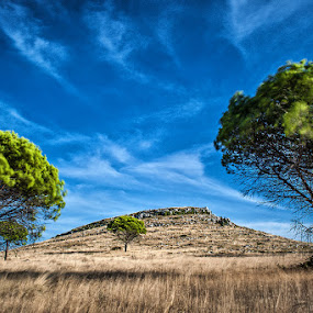 Old Friends by Zeljko Marcina - Landscapes Prairies, Meadows & Fields ( clouds, dugi otok, tree, croatia, pine trees, pine, telascica, , relax, tranquil, relaxing, tranquility )