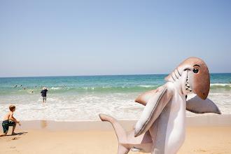 Photo: Dusky walking on Hermosa Beach. Credit: Chris Panagakis