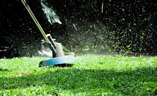 3 shocking reasons your lawn is in bad shape