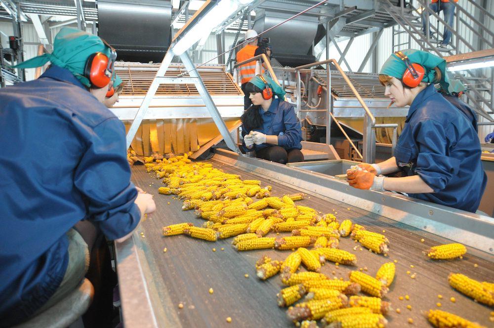 LNZ Group планує збільшити виробництво насіння фото 1 Universeed