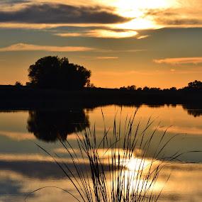 Sunset party by Vanja Vidaković - Novices Only Landscapes ( reflection, sunset, beautiful, trees, lake )