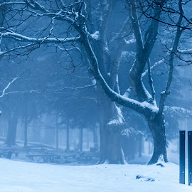 by Vix Paine - Landscapes Weather ( haze, snow at dusk, wood, silhouette, snowy, landscape, woods, early morning, dawn, tree, fog, trees, mist,  )