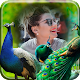 Peacock photo Frame for PC-Windows 7,8,10 and Mac