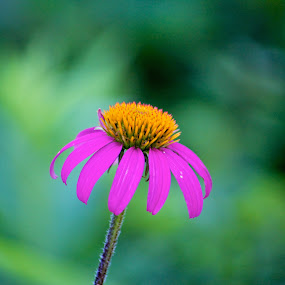 Lonely Flower by Dave Files - Novices Only Flowers & Plants ( plant, nature, bloom, yellow, flower )