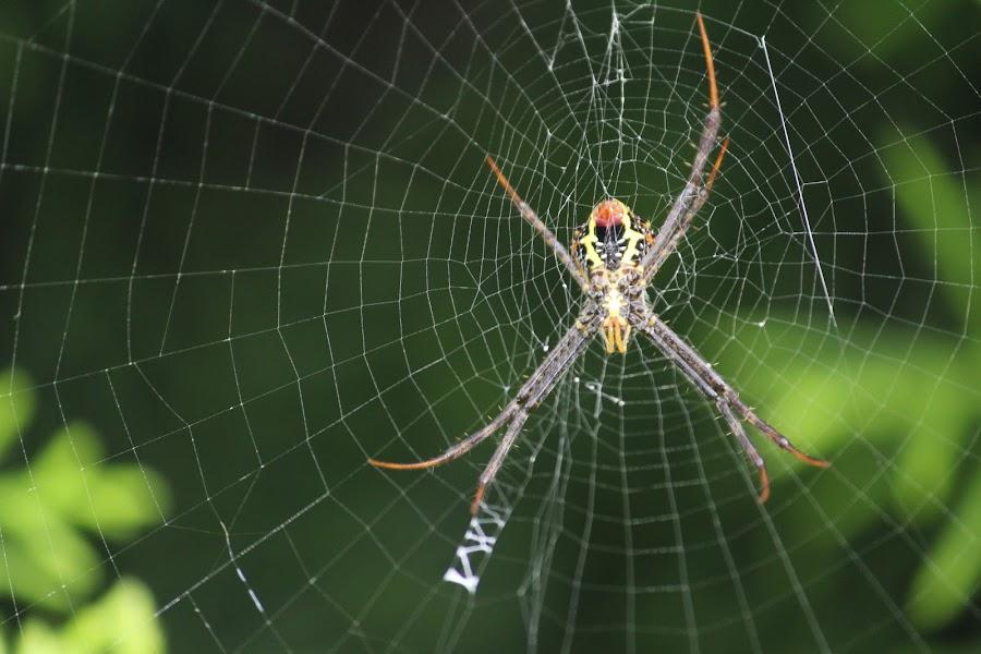 spider web by Suresh Kumar - Uncategorized All Uncategorized