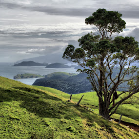 Coromandel Harbour by Tim Bennett - Landscapes Mountains & Hills