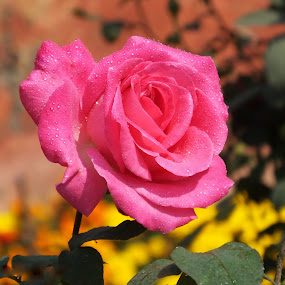 Wonderful creation of God ! by Debartist Lightpainter - Flowers Single Flower