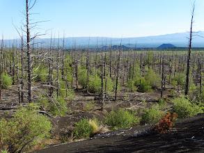Photo: возвращаемся не надолго  в мертвый лес