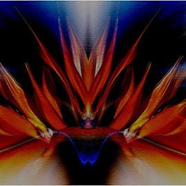 Fire queen by Marissa Enslin - Abstract Patterns
