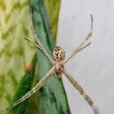 Aranha de prata