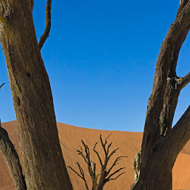 FRAMED BY A TREE by Issi Potgieter - Landscapes Deserts ( dead valley, dead tree, dead, namibia,  )