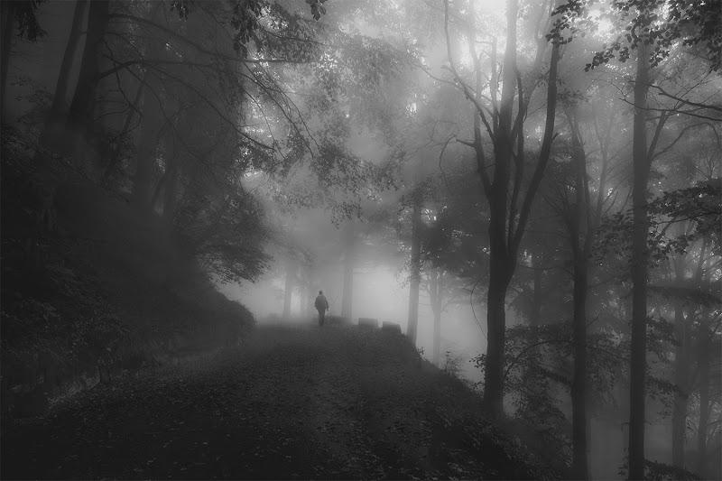 Smarrendo la retta via in una selva oscura.  di brunosma