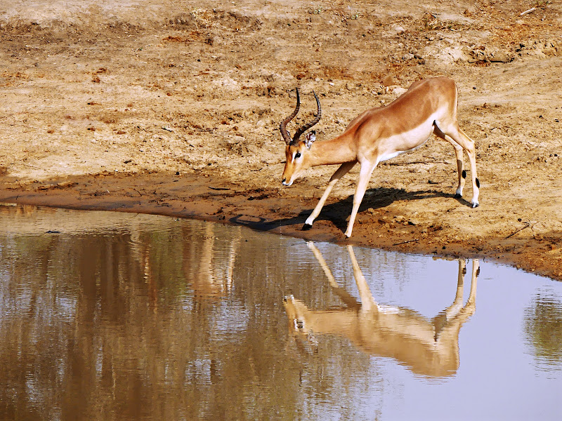 Alla pozza nel Kruger di silviola