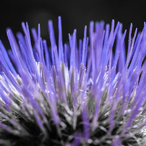 by Chloe Tatum - Nature Up Close Flowers - 2011-2013