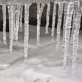 Icicles by Mehul V - Nature Up Close Other Natural Objects