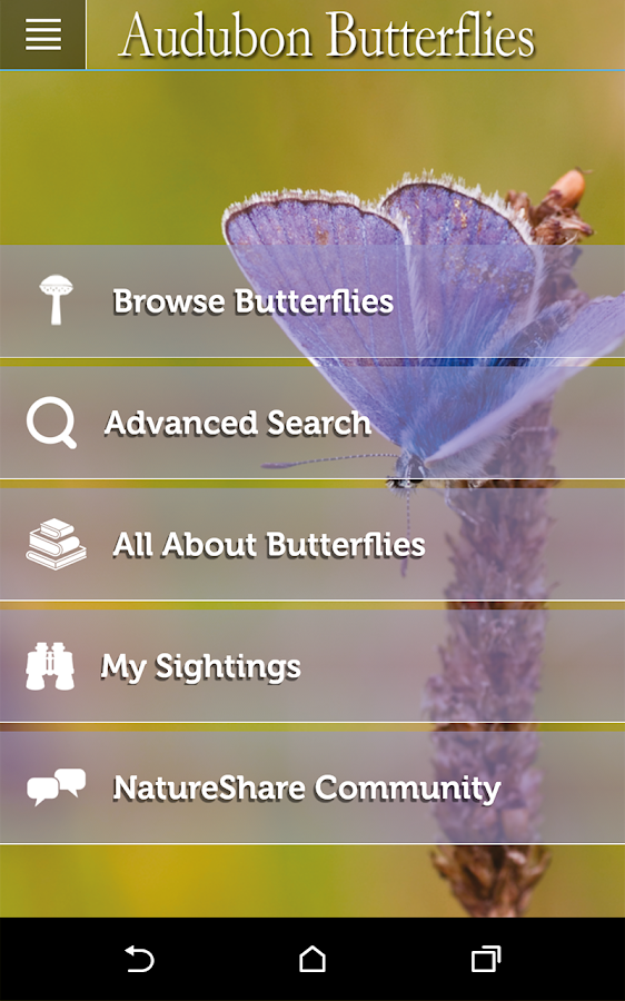 Audubon Butterflies- screenshot