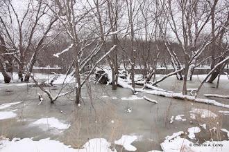 Photo: Flooded beaver lodge