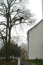 Photo: Schneiden der Linde, März 2011