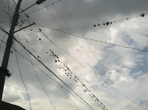 Photo: Still not sure what was growing on the power lines here. Some sort of vegetation fuzz balls.