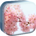 Pink Flowers of Spring Live WP icon