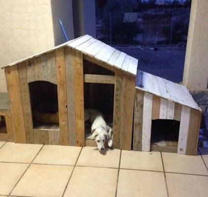 DIY Dog House - screenshot